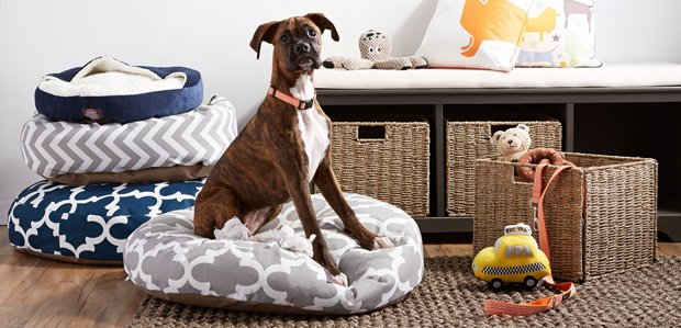 The Pet Shop: Tail-Wagging Beds, Collars, & More